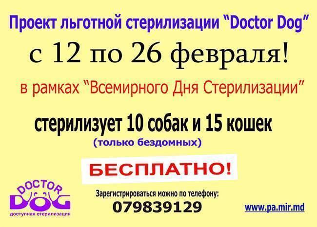 Doctor-Dog-pentru-adopta-2
