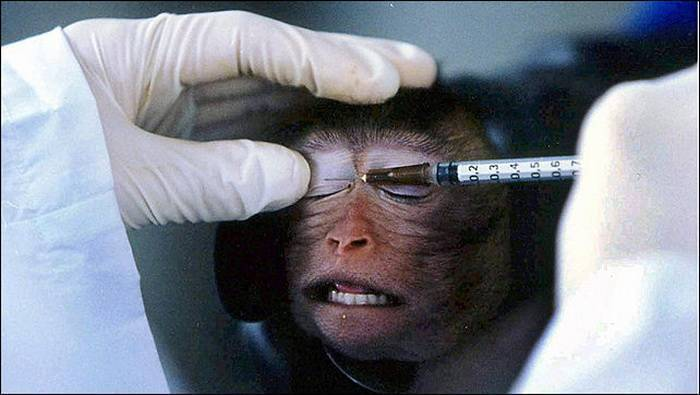 using monkeys in medical experiments