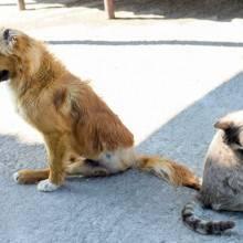 orthodoxy_animal_charity_0032-1