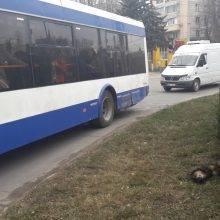 Собаки и троллейбус
